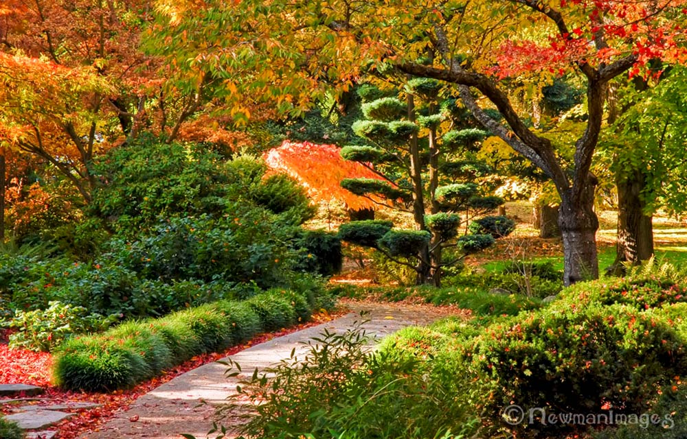 fall colors in lithia park japanese garden